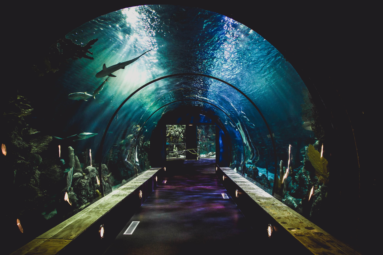 KLCC水族館 水槽トンネル